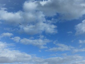 Bluest Sky